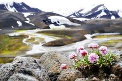 Paisagem de Landmannalaugar no verão de Islândia fotos de stock royalty free