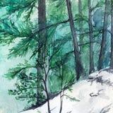 Paisagem de madeira do pinho da floresta do inverno de turquesa da aquarela Imagem de Stock