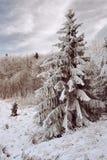 Paisagem de madeira nevado Fotos de Stock
