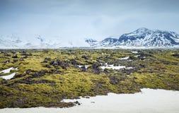 Paisagem de Misty Icelandic com musgo em rochas foto de stock royalty free