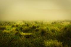 Paisagem de Misty Yellow Green Meadow Natural Fotografia de Stock Royalty Free