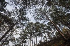 Paisagem de montanhas de Dalat em Vietname Foto de Stock