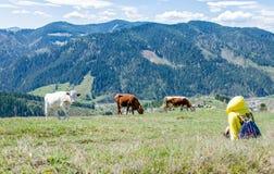 Paisagem de montanhas de Carpathians Foto de Stock Royalty Free