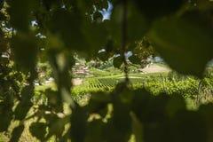 Paisagem de montes verdes eslovenos Fotografia de Stock