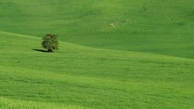 Paisagem de Moravian Toscânia, Moravia do sul, república checa Fotos de Stock Royalty Free