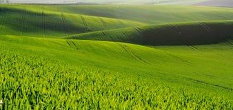 Paisagem de Moravian Toscânia, Moravia do sul, república checa Fotografia de Stock Royalty Free