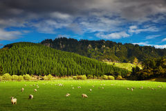 Paisagem de Nova Zelândia, ilha norte Fotos de Stock Royalty Free