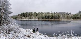 Paisagem de novembro no lago Ural com a floresta coberto de neve na costa do lago, Rússia imagens de stock royalty free