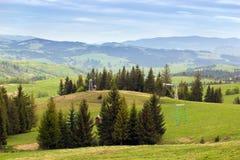 Paisagem de prados verdes com abeto e montanhas Foto de Stock Royalty Free