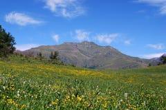 Paisagem de Pyrenees do espanhol Imagem de Stock