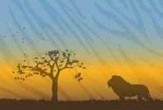 Paisagem de Savanne com a silhueta do leão Foto de Stock