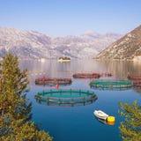 Paisagem de Sunny Mediterranean com a piscicultura no primeiro plano e as duas ilhas pequenas na distância Montenegro, baía de Ko fotos de stock royalty free