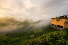 Paisagem de surpresa de Malásia Vista da plantação de chá no tempo do por do sol/nascer do sol dentro em montanhas de Cameron, Ma foto de stock