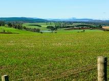 Paisagem de Tasmânia Fotos de Stock Royalty Free