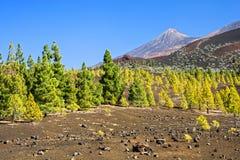 Paisagem de Tenerife Imagem de Stock Royalty Free