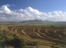 Paisagem de testes padrões do campo da colheita Imagem de Stock Royalty Free