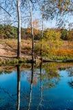 Paisagem de três álamos tremedores, refletida no rio imagem de stock