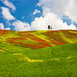 Paisagem de Tuscan Fotos de Stock