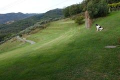 Paisagem de Tuscanian em Toscânia norte, cumes de Apuanin, Itália, Europa Imagem de Stock