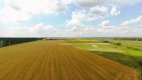 Paisagem de um campo de trigo amarelo com prados verdes e uma estrada filme