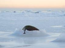 Paisagem de um mar congelado Imagem de Stock Royalty Free