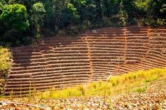 Paisagem de um prado na montanha Fotografia de Stock