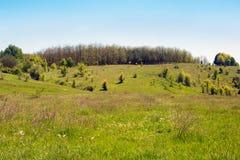 Paisagem de um vale gramíneo, de montes com árvores e de céu Fotografia de Stock Royalty Free