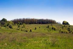 Paisagem de um vale gramíneo, de montes com floresta e de céu Imagem de Stock