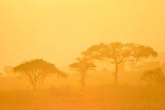Paisagem de uma floresta na névoa da manhã fotografia de stock