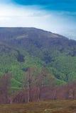 Paisagem de uma montanha verde grande com árvores Imagem de Stock Royalty Free