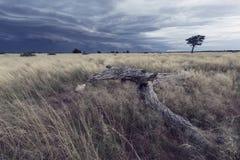 Paisagem de uma tempestade da chuva que aproxima-se sobre a grama de Kalahari Fotografia de Stock Royalty Free