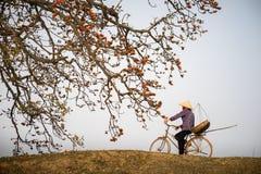 Paisagem de Vietnam A árvore de ceiba de florescência do Bombax ou o algodão de seda vermelho florescem com um ciclismo da mulher foto de stock royalty free