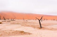 Paisagem de Vlei inoperante, Namíbia fotos de stock