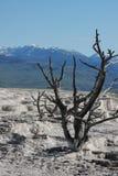 Paisagem de Yellowstone imagens de stock