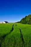Paisagem dinamarquesa, exploração agrícola e campo do país Imagem de Stock