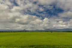 Paisagem disparada do campo de almofada do arroz Foto de Stock Royalty Free