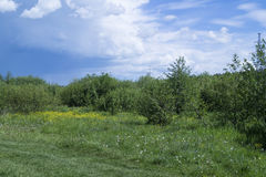 Paisagem do ano no terreno rural Fotografia de Stock Royalty Free
