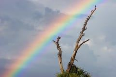 Paisagem do arco-íris Imagem de Stock