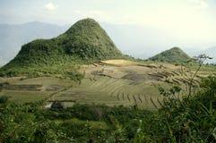 Paisagem do arroz de montanha Imagem de Stock