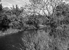 Paisagem do Beaver Creek fotografia de stock