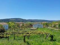 Paisagem do campo com as uvas do vinhedo pequeno e as casas crescentes da exploração agrícola, Portugal fotos de stock royalty free