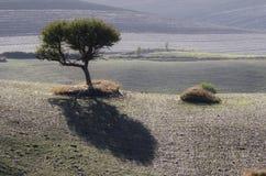 Paisagem do campo com uma árvore solitário Imagem de Stock Royalty Free