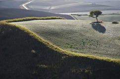 Paisagem do campo com uma árvore solitário Foto de Stock