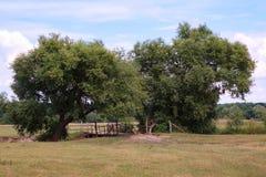 Paisagem do campo com uma ponte de madeira velha sobre o rio Fotografia de Stock Royalty Free