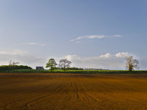 Paisagem do campo da colheita preparada semeando Imagem de Stock