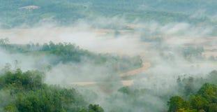 Paisagem do campo da névoa e do arroz da manhã Fotografia de Stock Royalty Free