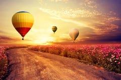 Paisagem do campo de flor bonito do cosmos e do balão de ar quente no por do sol do céu Foto de Stock