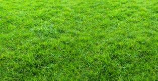 Paisagem do campo de grama no uso verde do parque p?blico como o fundo natural ou o contexto Textura da grama verde de um campo fotografia de stock