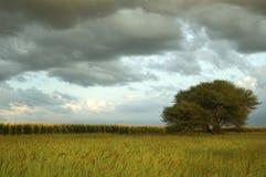 Paisagem do campo de milho com nuvens de trovão fotografia de stock royalty free