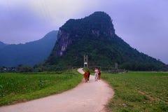 Paisagem do campo de Quang Binh com montanha surpreendente Imagens de Stock
